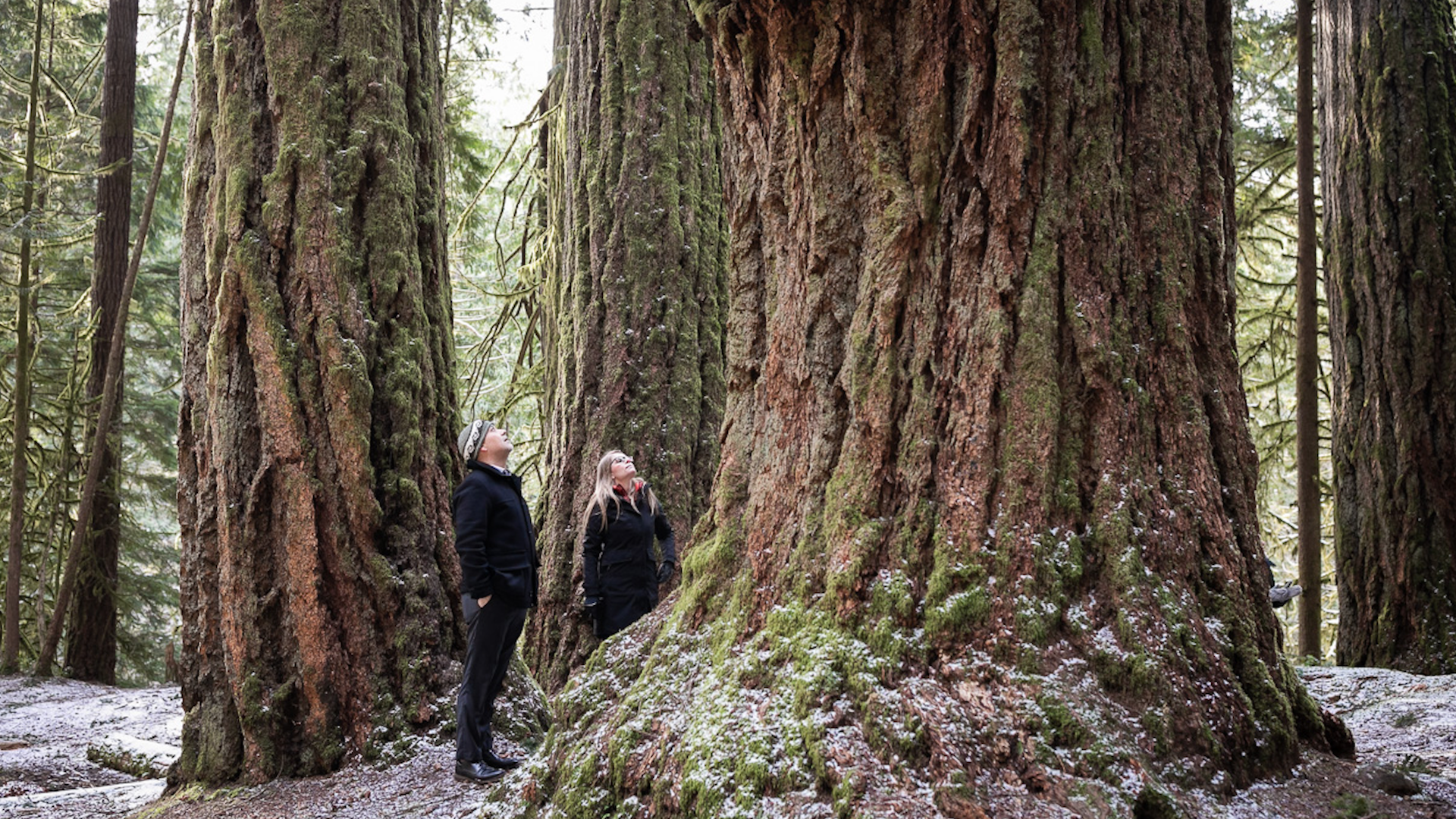Stop managing old-growth to zero