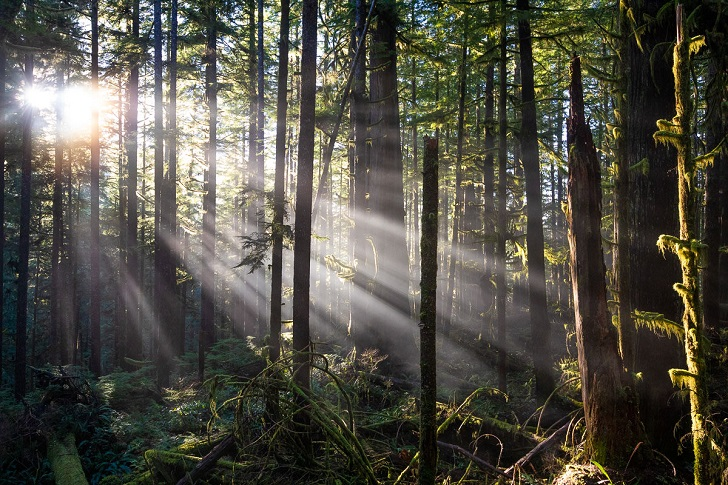 Actions speak louder than words: Protecting old growth is not a priority for the BC NDP